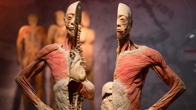Expo Real Bodies