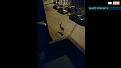 Un daim se promène tranquillement dans les rues d'Hanzinne
