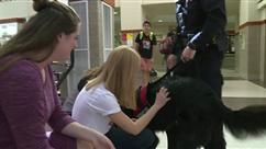 Voici Badge, le chien qui aide les élèves à se débarrasser du stress