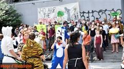 Pour la première fois en Belgique, un parti animaliste est lancé: en quoi consiste-t-il?