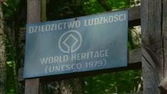 """La forêt de Bialowieza, une des dernières forêts primaires d'Europe, """"a été dévastée"""""""