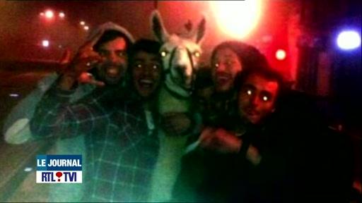 France: des fêtards ivres kidnappent un lama et lui font prendre le tram!
