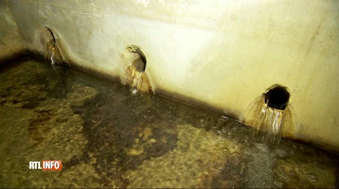 Le lisier pollue l'eau des nappes phréatiques: une association tente de limiter le problème