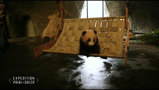 comment occuper un panda. Black Bedroom Furniture Sets. Home Design Ideas