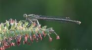 Christian Warzée, photographe d'insectes - Elle est où la nature ?