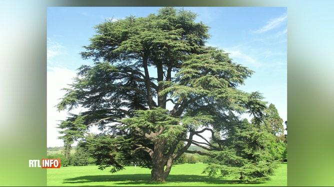 De nouveaux arbres pour résister au réchauffement climatique 8844171