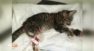 Loredana et Bilal récupèrent un chaton blessé au bord de l'autoroute