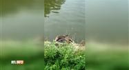 Wemmel: revit-on à nouveau une hécatombe de poissons et de canards dans l'étang du château?