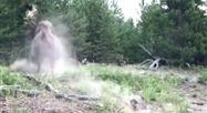 Un bison charge trois touristes au parc Yellowstone: une fillette envoyée dans les airs alors que les adultes fuient