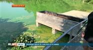 Envahi par des algues toxiques, le lac de Bambois doit être vidé