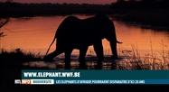 Si rien ne change, l'éléphant d'Afrique aura disparu en 2040