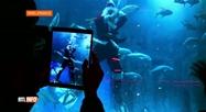 À l'aquarium de Paris, le Père Noël nage avec un requin: voici pourquoi