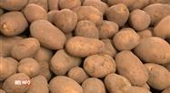 Le prix des pommes de terre pourrait grimper dès le mois d'octobre