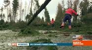 Tempête Ciara: des centaines d'arbres ont été déracinés