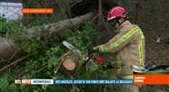 Tempête Dennis: des pompiers surtout appelés pour du tronçonnage