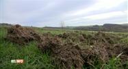 La commune de Floreffe fait face à une prolifération de sangliers