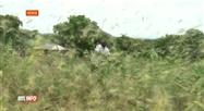 Les essaims de criquets ravagent tout en Afrique de l'Est