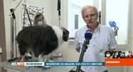 Déconfinement en Belgique: c'est le rush dans les salons de toilettage