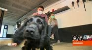 Coronavirus en Belgique: les écoles de dressage canin peuvent ouvrir