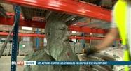 Statues de Léopold II: un buste déboulonné à Auderghem et des plaques tagguées