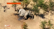 Au moins 275 éléphants sont morts mystérieusement au Botswana