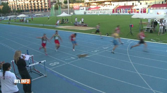 Un CHAT déboule sur la ligne d'arrivée d'une course de 100 mètres
