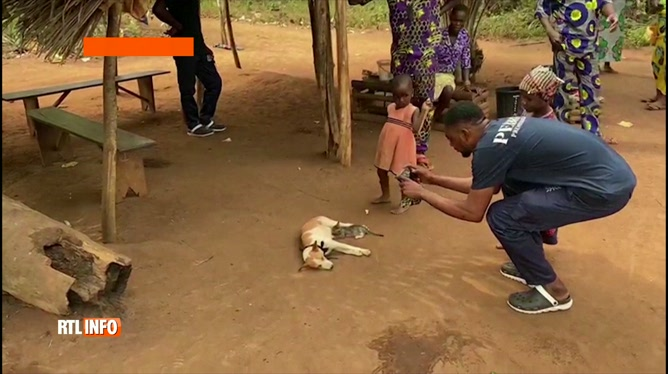 Scène inhabituelle: une chienne nourrit… un chaton