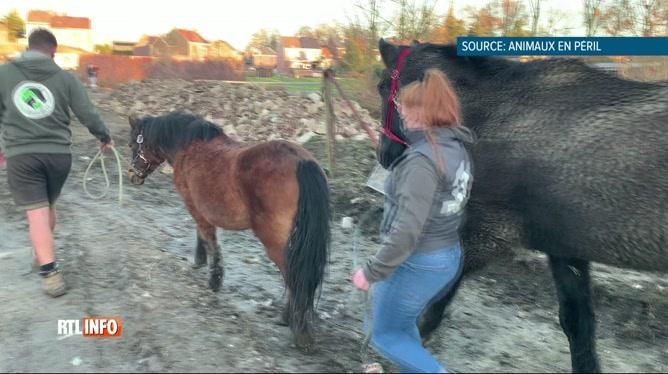 Horribles scènes de maltraitance animale à La Louvière