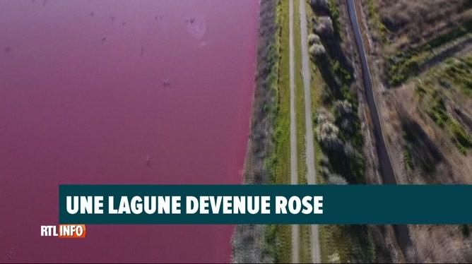 Argentine: Une lagune de Patagonie devient rose à cause de la pollution