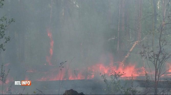 Un million et demi d'hectares ravagés par des feux de forêt en Sibérie